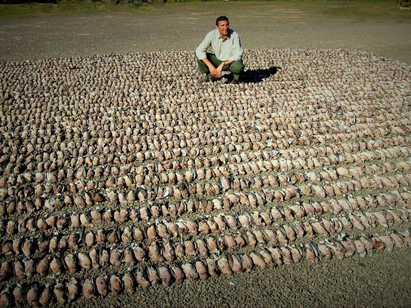 Argentina Dove Hunting: minimum of 1000 rounds per day… per hunter