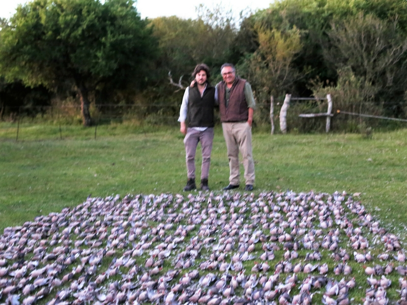 Best Dove Hunting In The World Argentina Dove Hunting